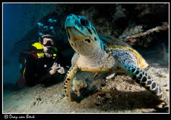 Diver with turtle on the Thistlegorm. by Dray Van Beeck 